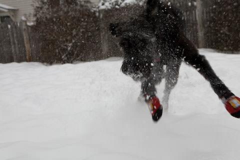 Snow Day in Northampton, MA