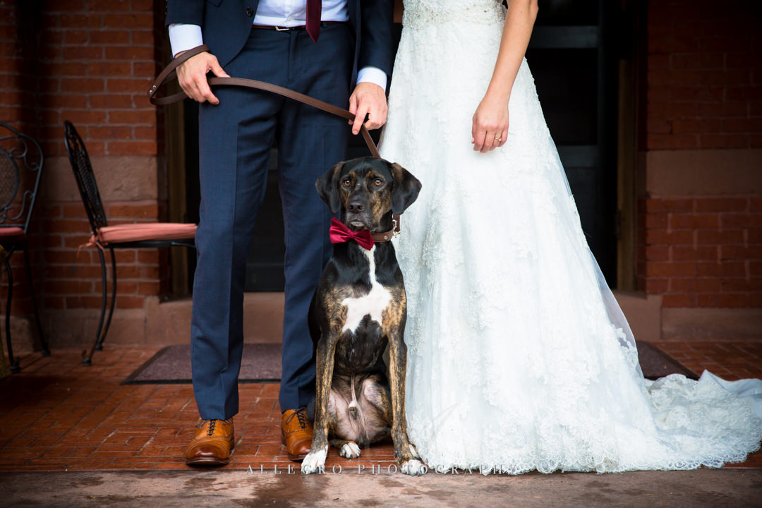 bridal portraits with dog stevens estate - photo by allegro photography