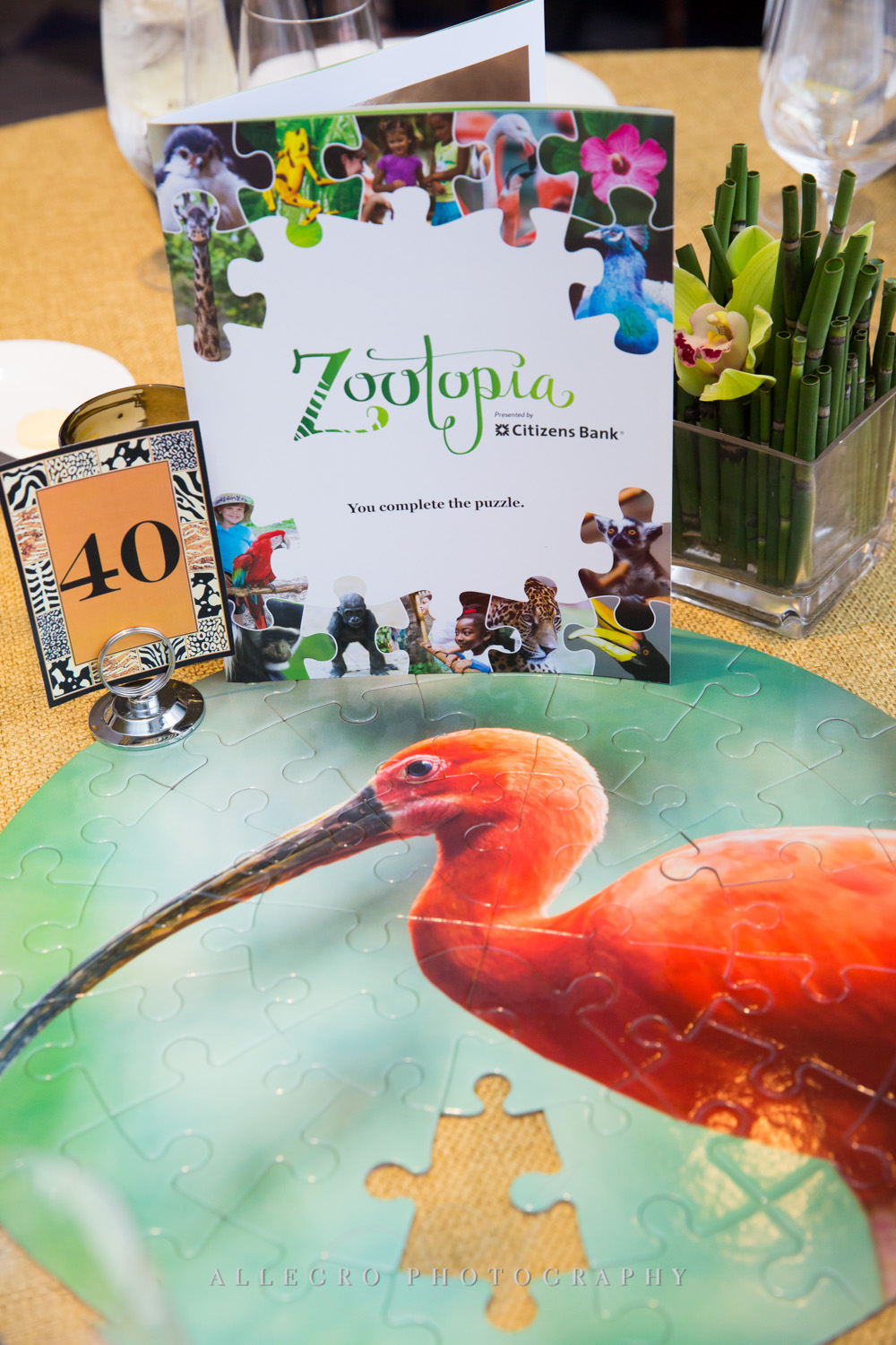 new england zoo event - photographed by allegro photography