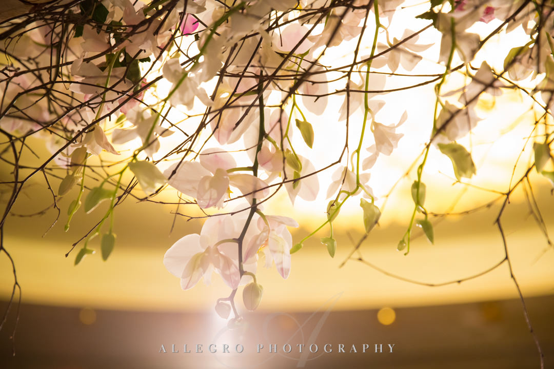 Closeup of dangling flowers | Allegro Photography